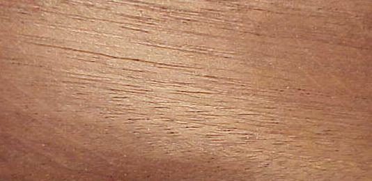 Mahonie monster mahogany mahagoni